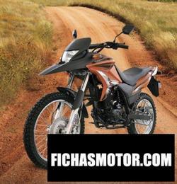 Imagen moto Dinamo Scorpion 250 2020
